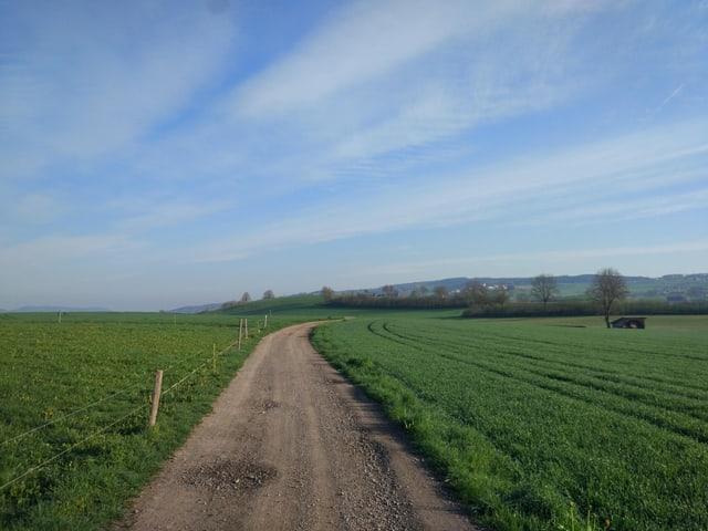 Ein Feldweg durch Weidefläche.