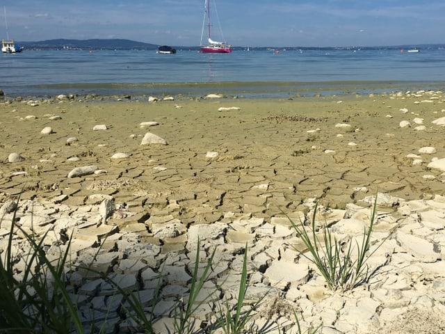 Ausgetrocknete Uferzone des Bodensees.