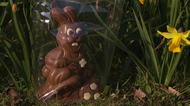 Schokoladenosterhase im Gras