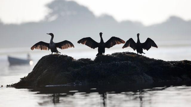 Vögel sitzen auf kleiner Insel