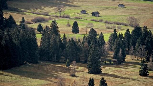 Eine Weide in der Region Kleckelmoos-Gais.