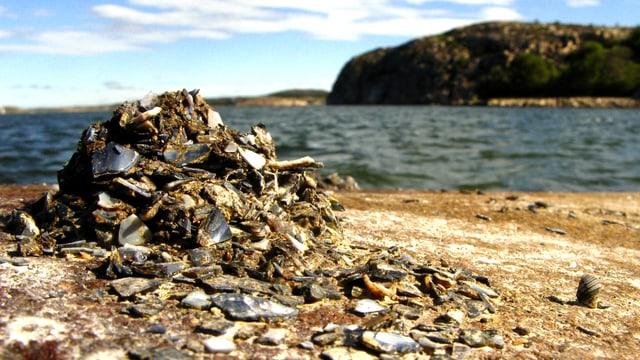 Ein Berg aus Muscheln und Schlamm an einem Strand, dahinter das Meer.