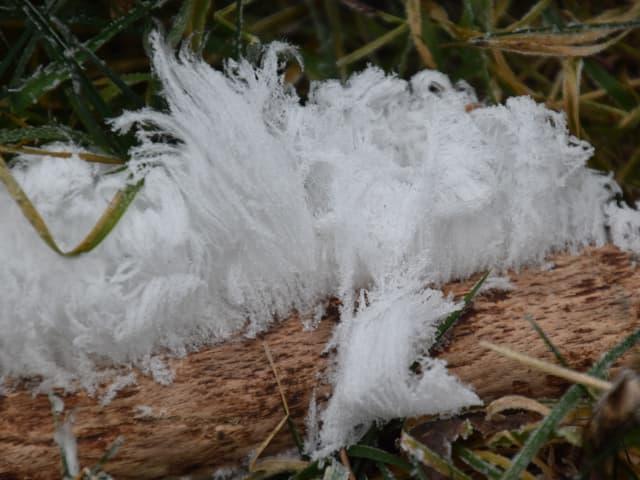 Ein Büschel Eisfäden an einem Ast.