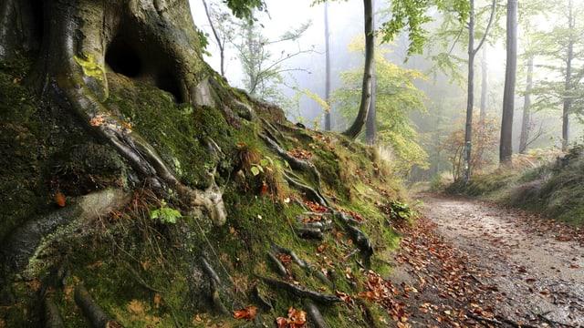 Ein Weg, der durch einen Wald führt.