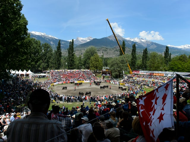Die Arena im Wallis, wo die Kuhkämpfe ausgetragen werden.