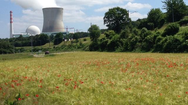 Atomkraftwerk Leibstadt und im Vordergrund ein Getreidefeld.