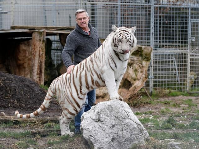 Raubtierdompteur Rene Strickler mit einem weissen Tiger