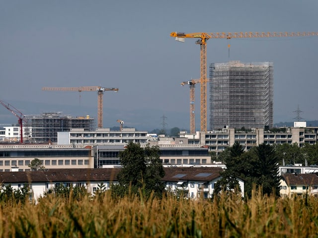 Ein Feld an dessen Horizont Gebäude und Baukräne zu sehen sind.