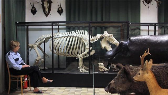 Frau sitzt in einem Naturkundemuseum auf einem Stuhl.