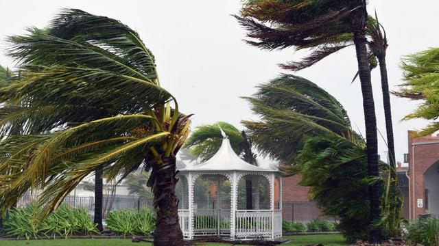 Palmen werden vom Zyklon zur Seite gedrückt.
