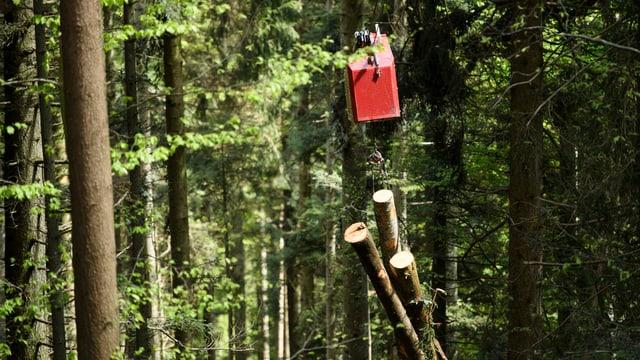 Wald im Tamninatal