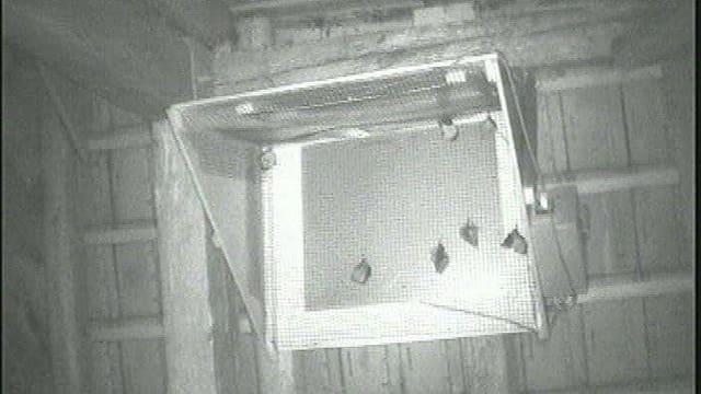 Fledermäuse im Dachstock.