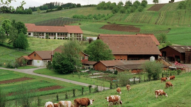 Bild vom Institut mit mehreren Gebäuden, rund herum hat es Felder, auf einem davon stehen Kühe.