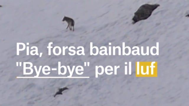 Laschar ir video «Bye-bye luf?»