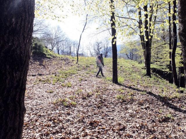 Eine junge Frau spaziert im Gegenlicht durch einen Wald.