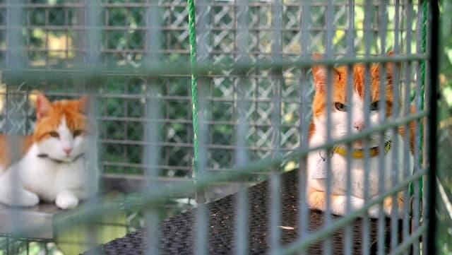 Zwei Katzen in einem Tierheim-Käfig