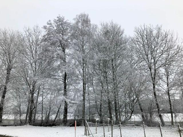 Bäume im Schnee.