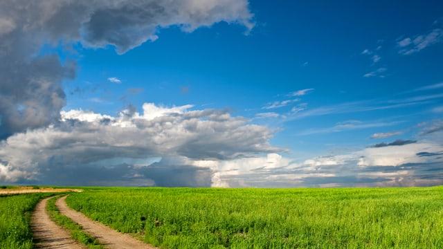 Feld in der gleissenden Sonne, ein Gewitter zieht auf.