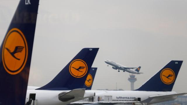 Ein Lufthansa-Maschine startet im Hintergrund. Davor: Heckflossen anderer Flugzeuge.