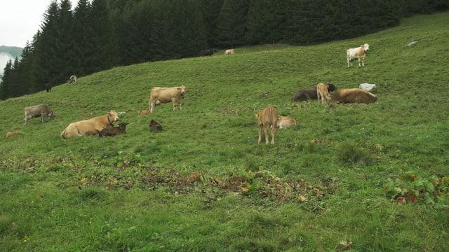 Fotgrafia d'ina pastgira cun vatgas mamma en Val Lumnezia