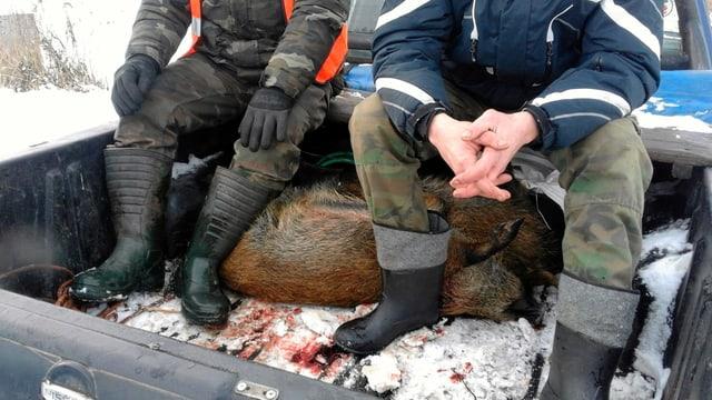 Männer auf einem Pick-up mit einem toten Wildschwein