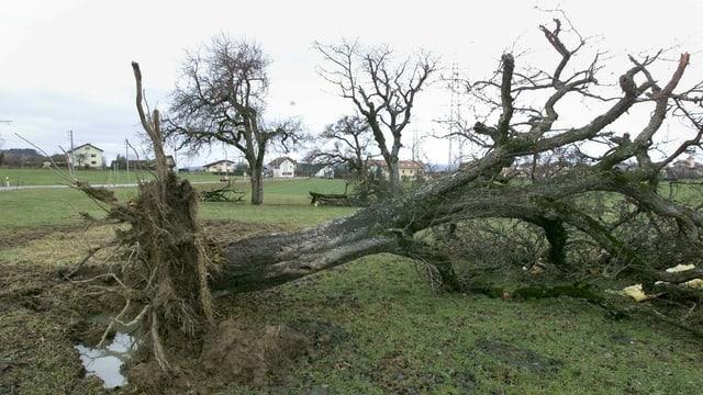 Umgestürzter Baum auf offenem Feld.
