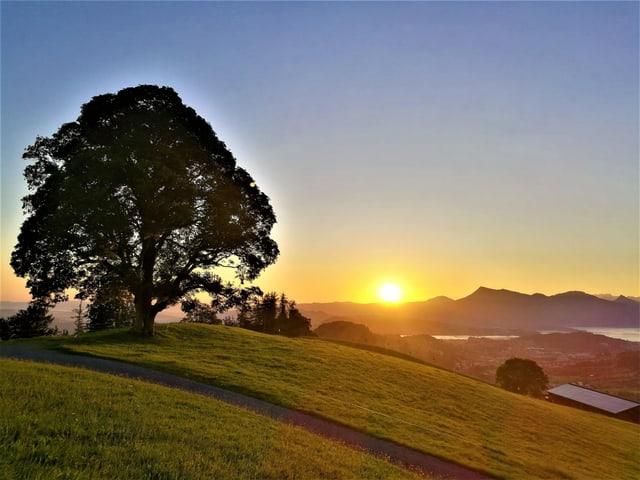 Orange leuchtende Sonne am Horizont, im Vordergrund tauchen ein Baum und die Wiesen ebenfalls in das orange Morgenlicht ein.