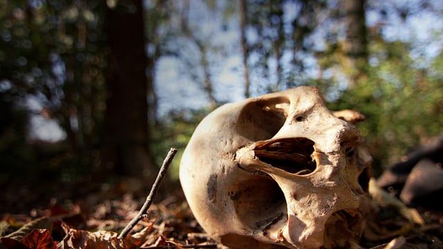 Video «Tod – Eine Reise durchs Leben: Der physische Tod (1/5)» abspielen