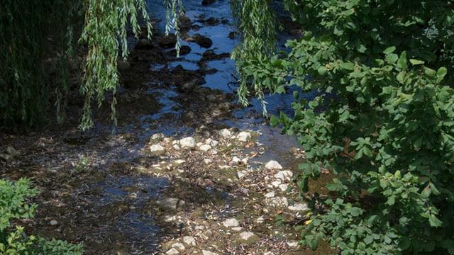 Ein Bach, der wegen der Hitze wenig Wasser führt.