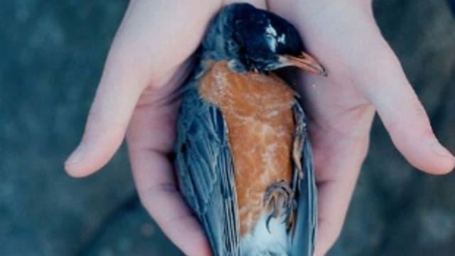 Ein toter Vogel.