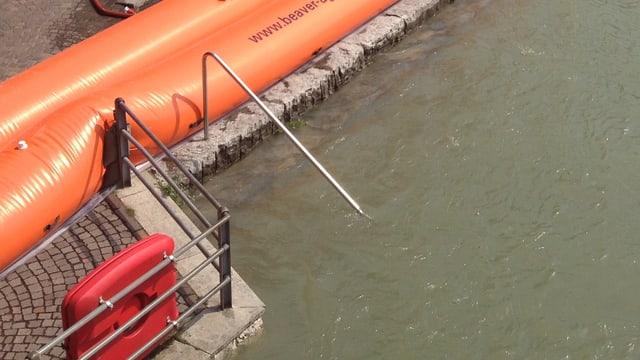 Beaver-Elemente an einem Fluss, der fast über die Ufer tritt