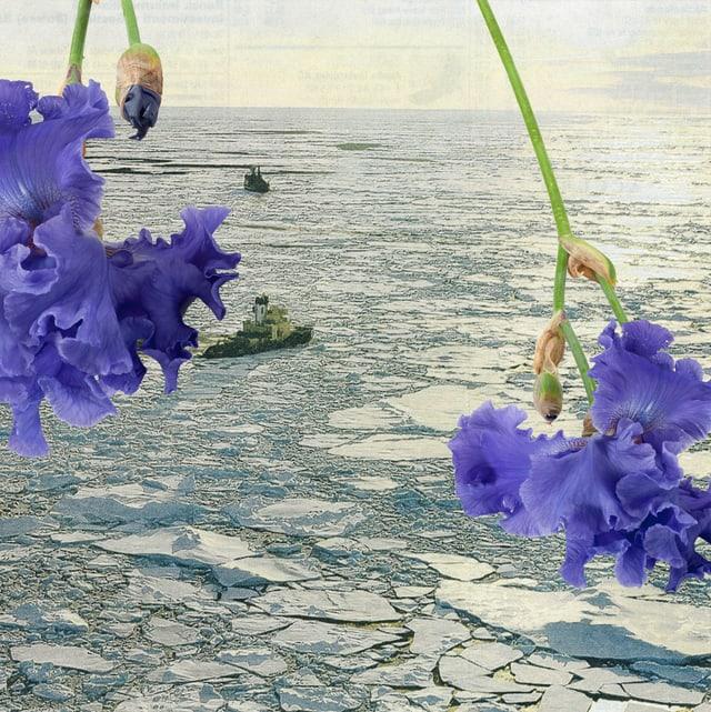 Foto einer Videoarbeit: Blumen hängen über dem gefrorenen Wasser.