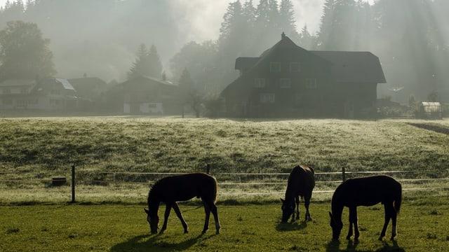 Pferde vor einer nebligen Landschaft mit Bauernhöfen.