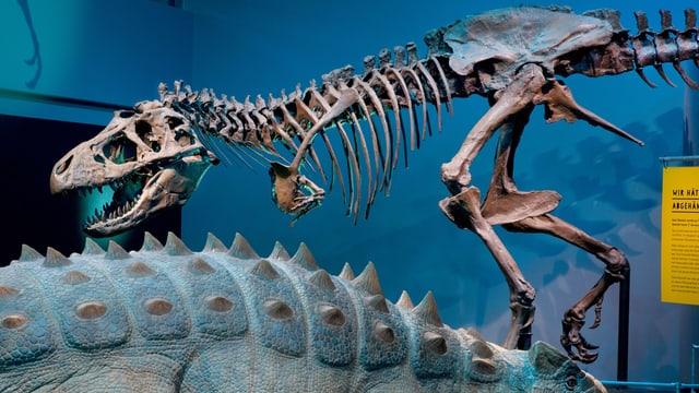 Dinosauriergerippe im Naturhistorischen Museum Bern
