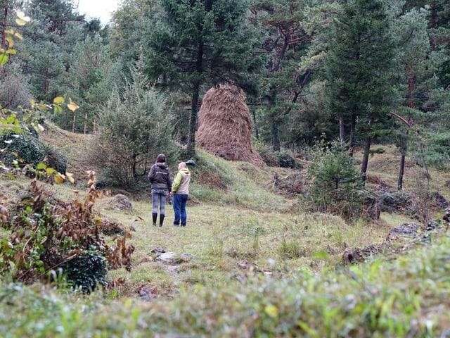 Leichter Föhrenwald