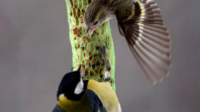Vögel und Vogelfutter