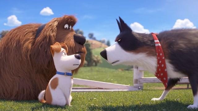 Drei animierte Hunde. Ein grosser, zotteliger und ein kleiner Terrier sitzen einem Schäferhund gegenüber.