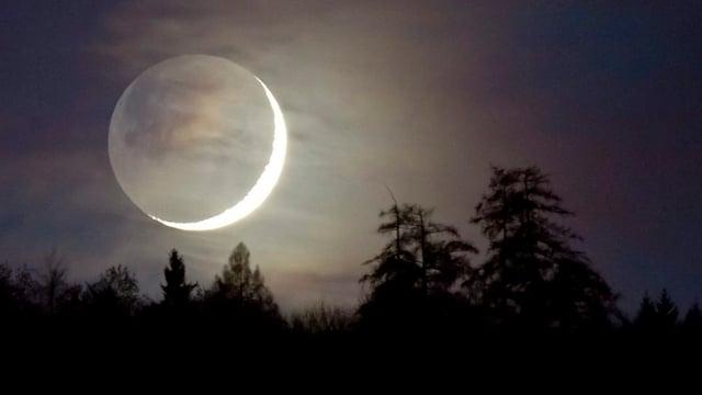 Zunehmender Mond vor Baumwipfeln.