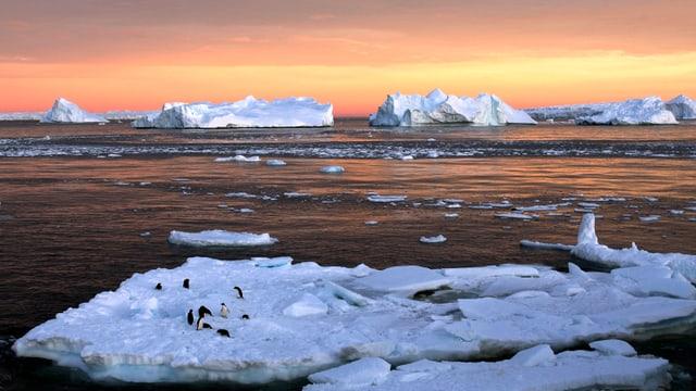 Ein Dutzend Pinguine treiben auf einer Eisscholle in der Antarktis vor einem malerischen Sonnenuntergang.