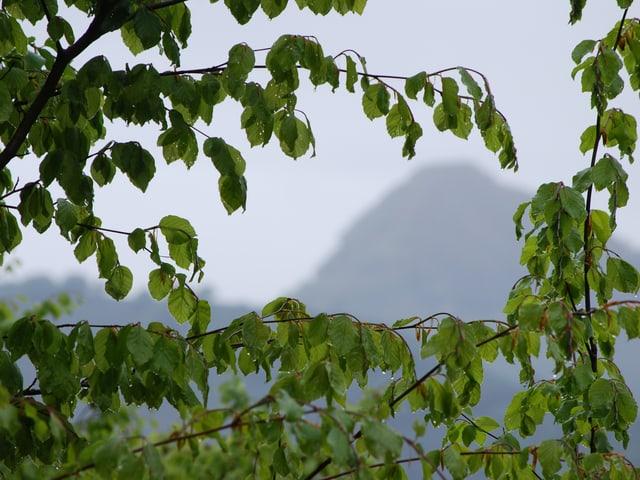 Verregnete Äste, im Hintergrund ein Berggipfel.