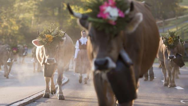 Kühe beim Alpabzug.