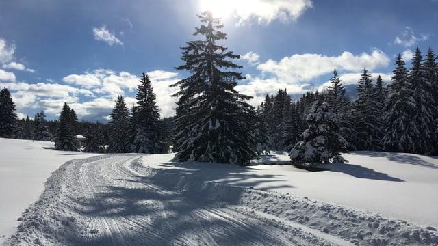 Langlaufloipe in Valbella