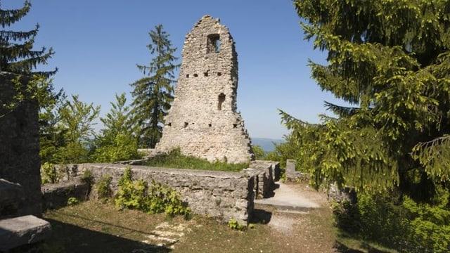Ruine Farnsburg umgeben von Tannen.