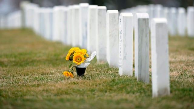Eine gelbe Pflanze steht neben weissen Grabsteinen.