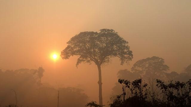 Erste Priorität muss es sein, die Regenwälder nicht massiv abzuholen.