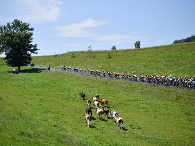 Das Peloton bei einer Etappe der Tour de Suisse 2017.