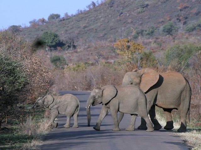 Drei Elefanten.