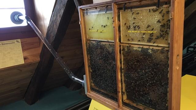 Zwei relativ dünne Glaskästen, darin sind die Bienen. Ein Glasrohr führt von den Kästen zum Fenster, wo die Bienen rausfliegen können.