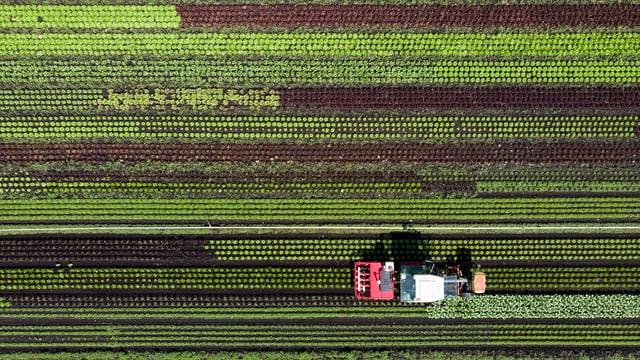 Traktor aus Vogelperspektive auf Gemüsefeld