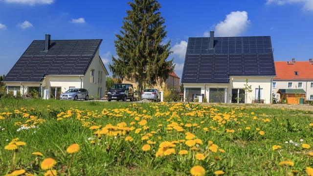 Einfamilienhäuser mit Dächern voller Photovoltaik-Panels, im Vordergrund eine gelb blühende Wiese.